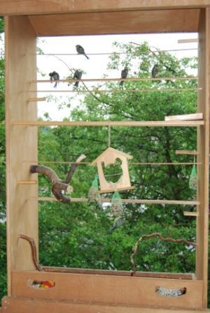 Meisenfamilien im Vogelhaus an der Elternschule Horner Geest, ein Naturerlebnis zum Greifen nah, direkt vor dem Fenster.
